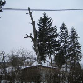 Strom s priemerom 120_11