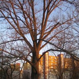 Strom s priemerom 190_1